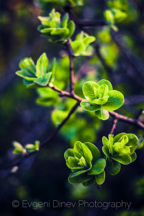 Пролетни листенца