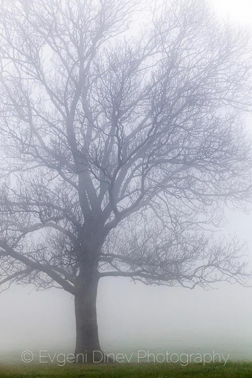Дърво в мъгла