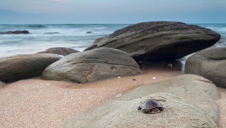 Морска костенурка