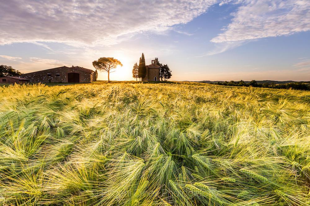 Златно Тосканско поле