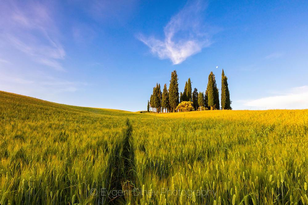 Пътека в житно Тосканско поле