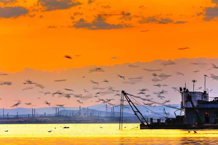 Птици над езеро Вая по залез
