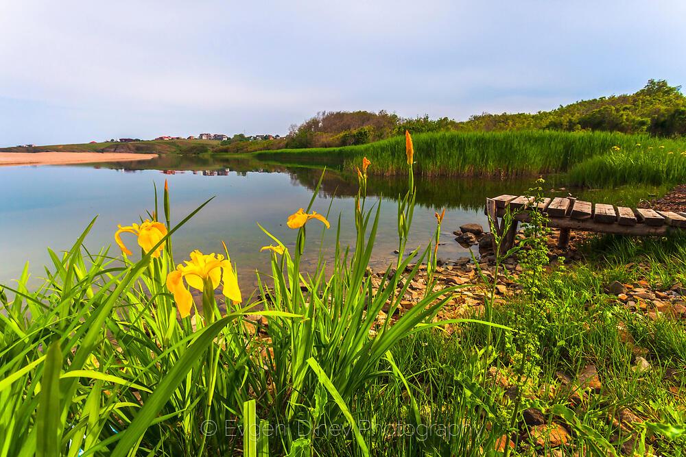 Жълти цветя край реката