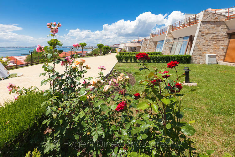 Рози в Свети Влас