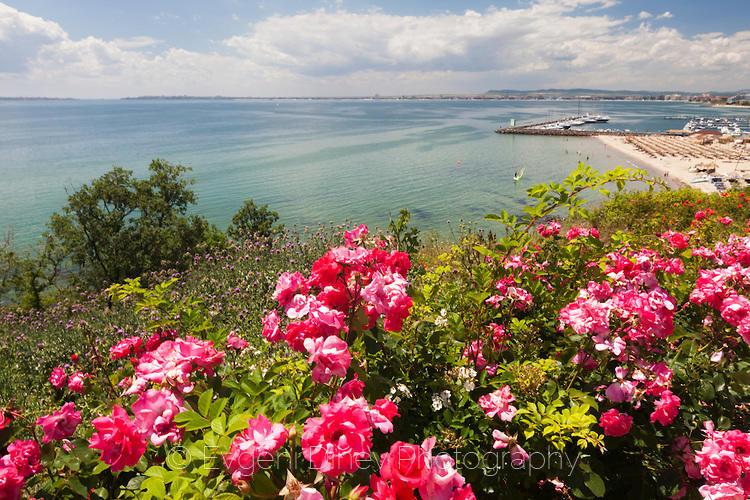 Розови рози край морето