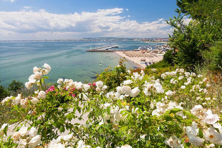 Бели рози край морето