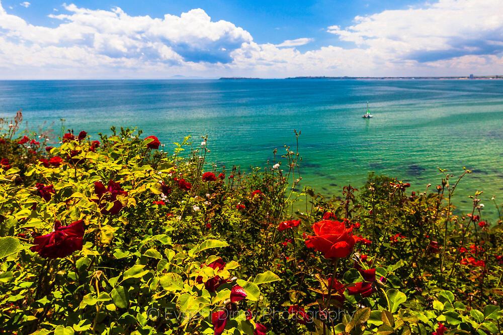 Червени рози и синьо море