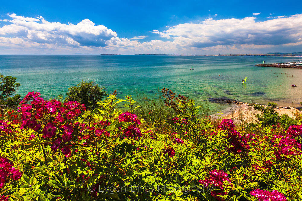 Лилави цветя край морето