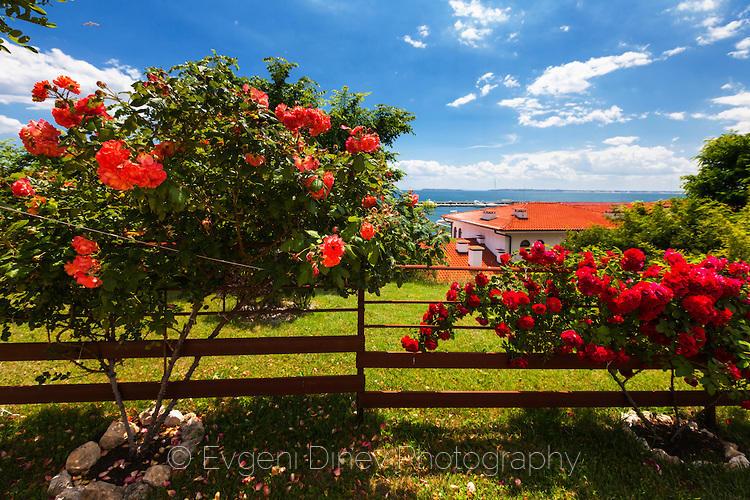 Градина с рози в Свети Влас