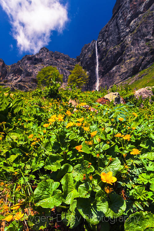 Жълти цветчета под Райското пръскало