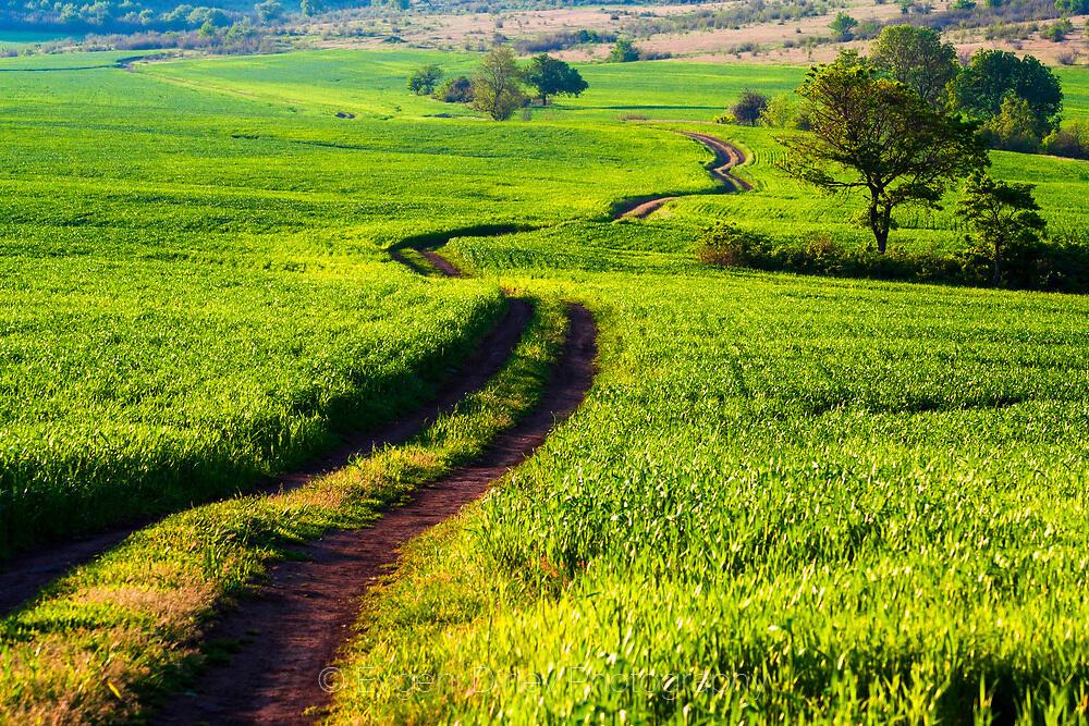 Зеления път