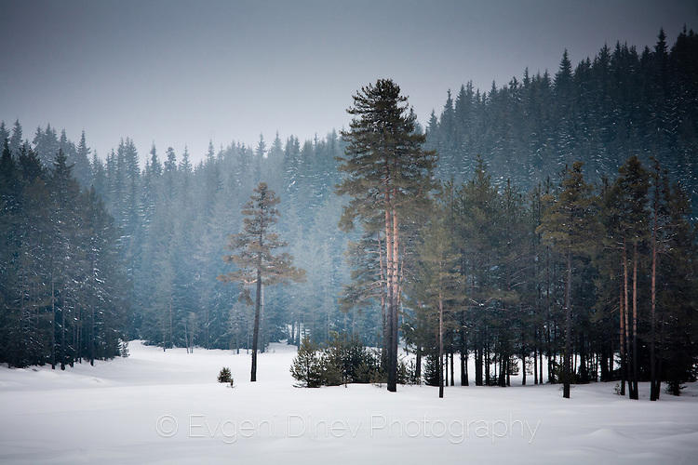 Последния мартенски сняг на Широка Поляна