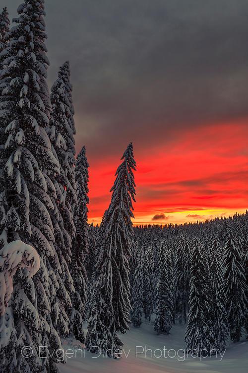 Снежна белота в цветовете на изгрева