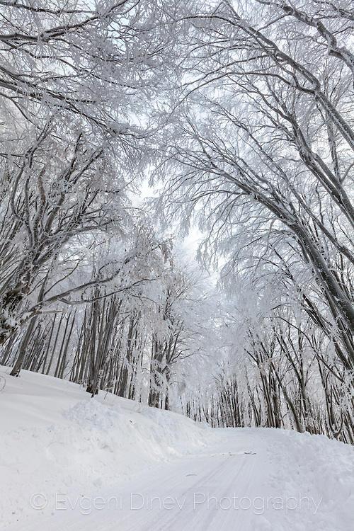 Зимен път през букова гора