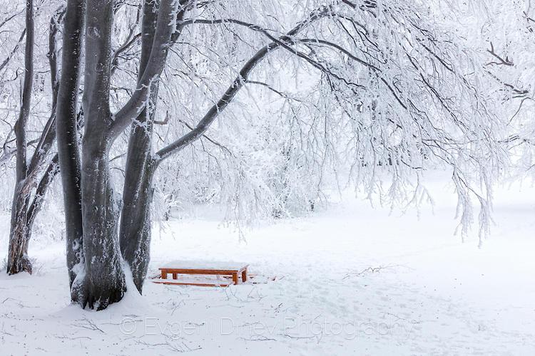 Масичка за пикник в снега под дърво