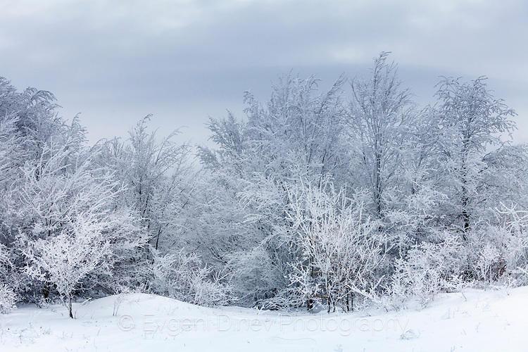 Снежна гора в парк Сините Камъни