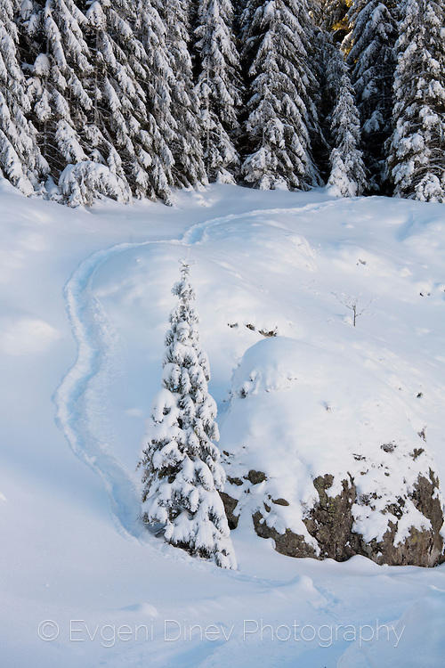 Еленска пътека в снега